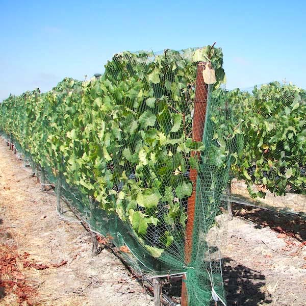 bird netting stops crop loss   protect vines, berries with