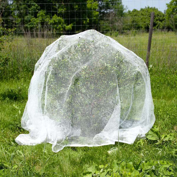 Plantra Avigard Hex Mesh Anti Bird Net For Fruit Trees Berry Bushes Super Premium Heavy Gauge 16 4ft X 16 4ft