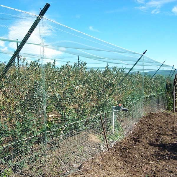 Plantra AviGard Easy-Fit Square Mesh Anti-Bird Net - Premium (Medium Gauge)  - 17ft x 1000ft