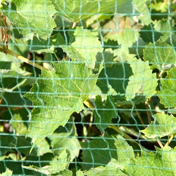 784a33f5459e8 bird netting protects vines, blueberries other crops 24/7 | plantra