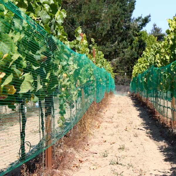 Plantra Avigard Easy-Fit Square Mesh Vineyard Side Net - 3 28ft x 3,280ft