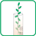 GROW TUBES FOR TREES AND VINES