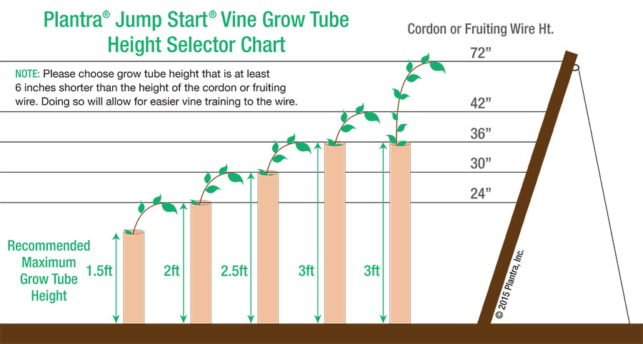 Plantra-Jump-Start-Vine-Orchard-Grow-Tube-Height-Selector-Chart-Web-900482.jpg