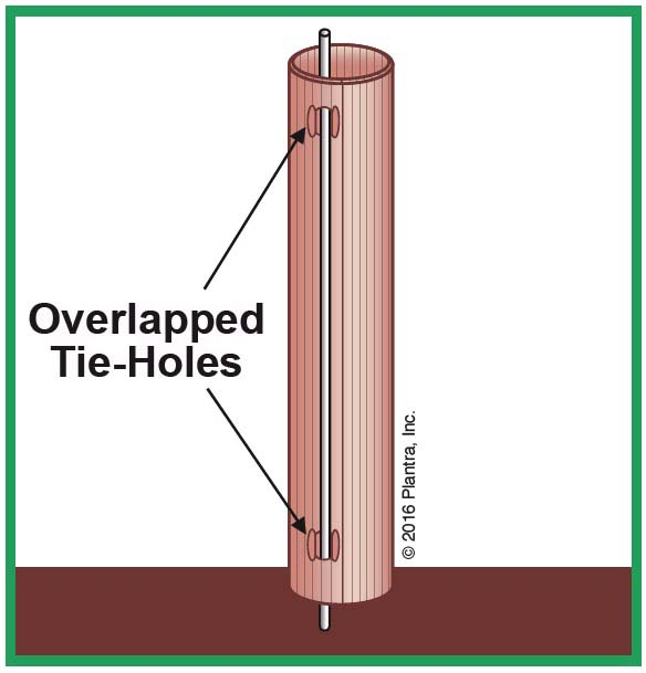 Tube Trellis: Vine-grow-tubes Shelter From Rabbits-rodents