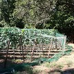 Vineyards And Berry Fields Near Dense Tree Cover Are Magnets For Birds And Are Perfect Candidates To Protect With Netting