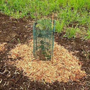 Plantra Rigid Mesh Tube - Tree & Shrub Protector, 12in Open Diameter, 328ft Roll (1-Roll)