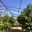 AviGard Crop Structure Knotted Bird Net Installed Over Frame Allows Lots Of Room To Harvest While Fruit Trees Are Protected From Birds