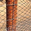 AviGard Crop Structure Knotted Bird Net Above Keeps The Birds Out & Wire-Metal Fence Stops Entry By Livestock & Chewing Rodents