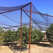 AviGard Crop Structure Knotted Bird Netting On Pipe Frame Structure Protects To Keeps Birds Out & Fruit Trees Safe Inside